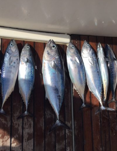 Charter de Pesca en Benalmádena Málaga (32)