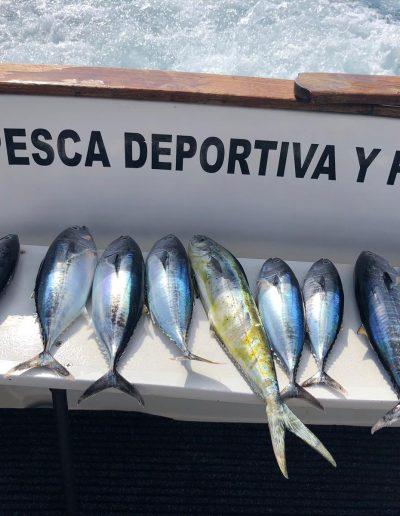 Charter de Pesca en Benalmádena Málaga (8)
