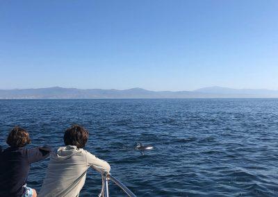 Foto Avistamiento de delfines - dolphin spotting Benalmádena Yo te espero (26)