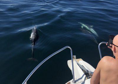 Foto Avistamiento de delfines - dolphin spotting Benalmádena Yo te espero (10)